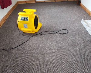 Carpet/Rug cleaning